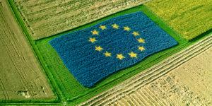 UE en campo